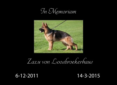 In Memoriam Zazu